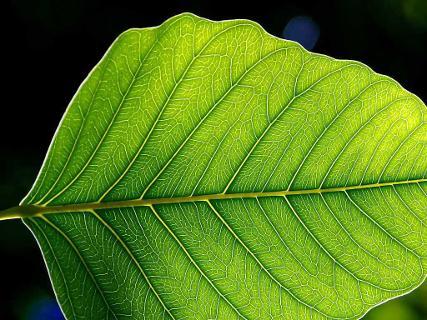fotosintesi gallery