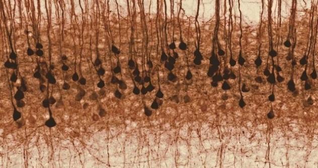 Fellin Neuron febbraio2017 testo